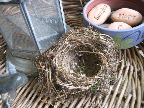 Nest6